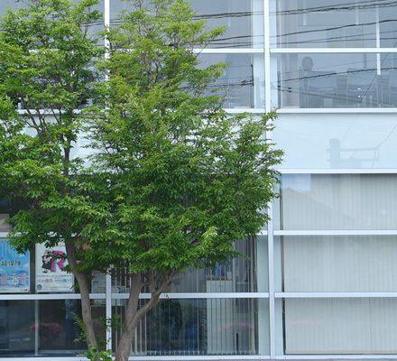 エール保険事務所 | 鹿児島県にある総合保険代理店